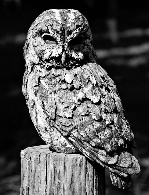 Artificial Owl