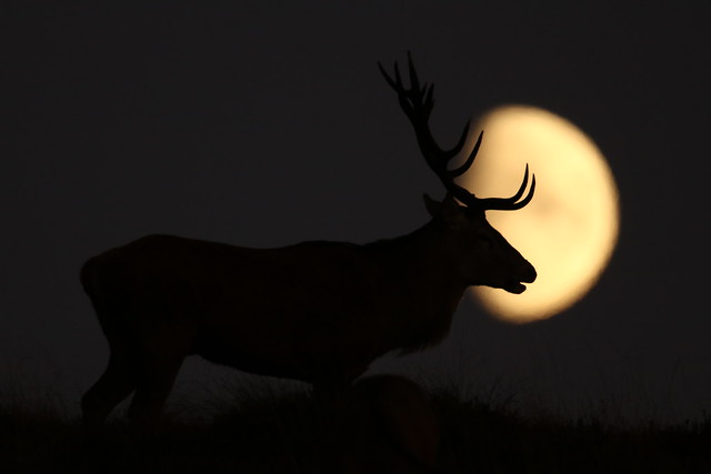 By The Moon