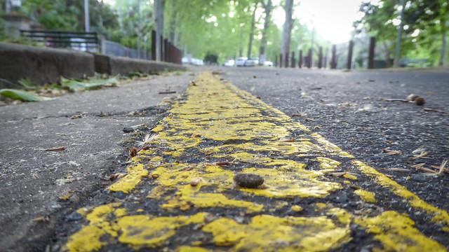 Downlow Yellow