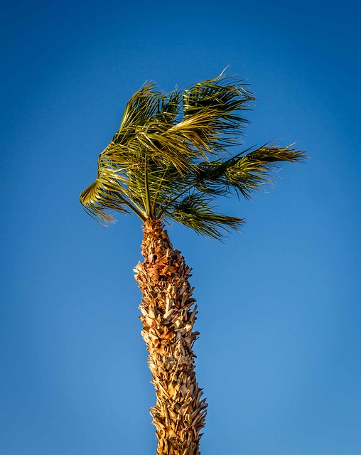 Wind and Palm Tree