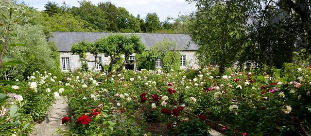 La roseraie, manoir du Plessis, XVIIe siècle, Saussey, arrondissement de Coutances, Manche, Normandie.