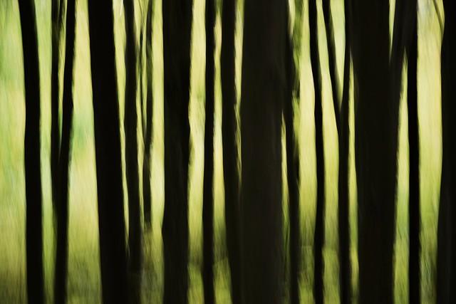 trees ICM