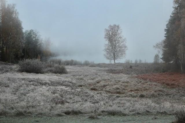 Kråkviken Pond hidden in the mist