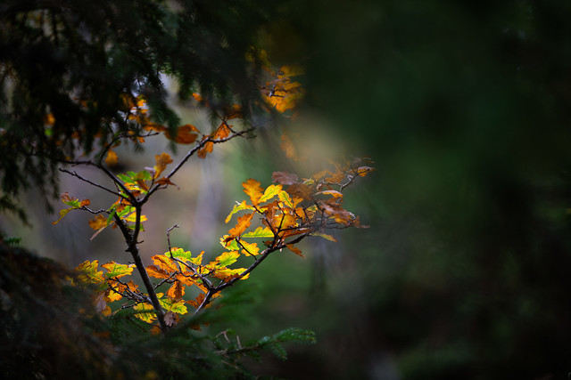 Intimate landscape. Autumn in Småland.