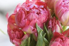 :cherry_blossom: