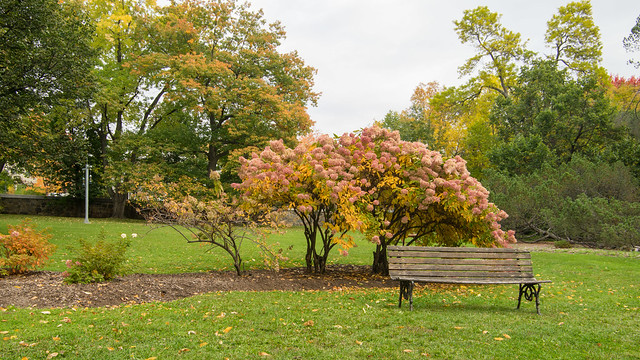 Parc des Moulins, automne, Québec, PQ, Canada - 07883
