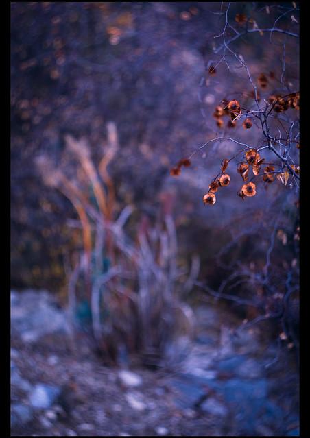 Autumn deep