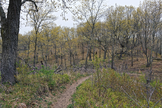 Now I See the Trees and Wonder of Springtime Coming (Indiana Dunes National Park)