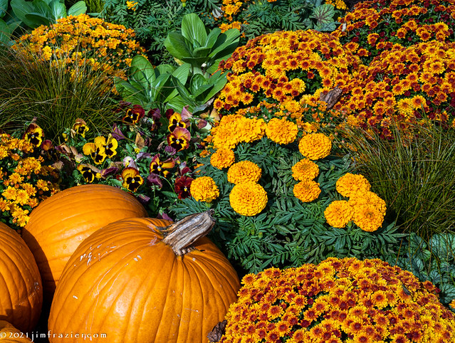 Pumpkins and Pansies and Mums, Oh My