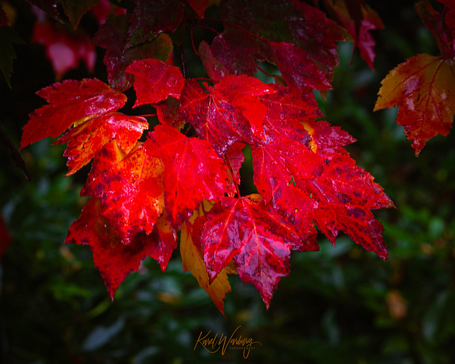 Autumn days, wet and gloomy