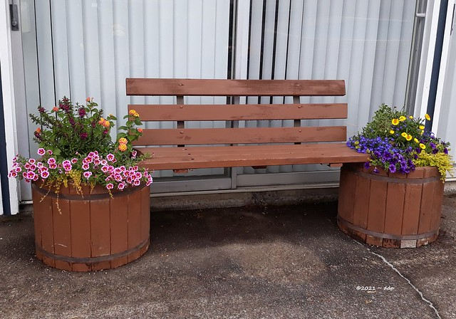 Wooden Bench Flanked with 2 Flower Planters & Info About My Covid-19