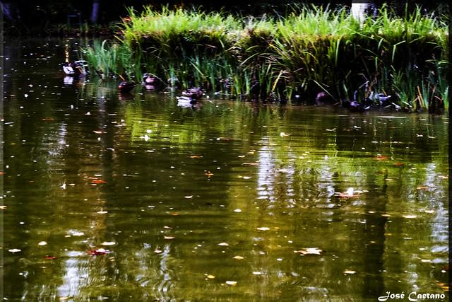 IMG_2659_Twilight in the Lake