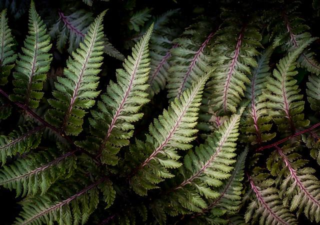 light on the fern