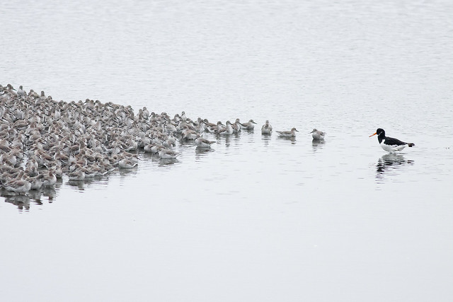 'Now listen here you lot, single file!'