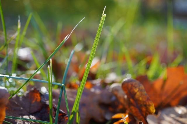 Sunshine and grass..