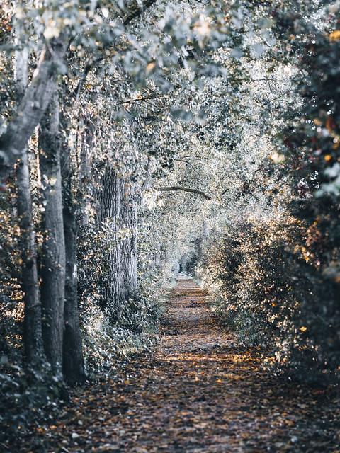 Doorway to Autumn