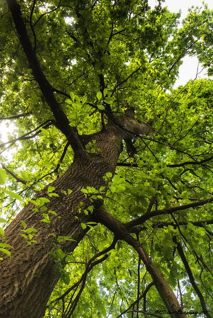 ... different spatial levels of green / verschiedene räumliche Ebenen von grün / 01036 ...