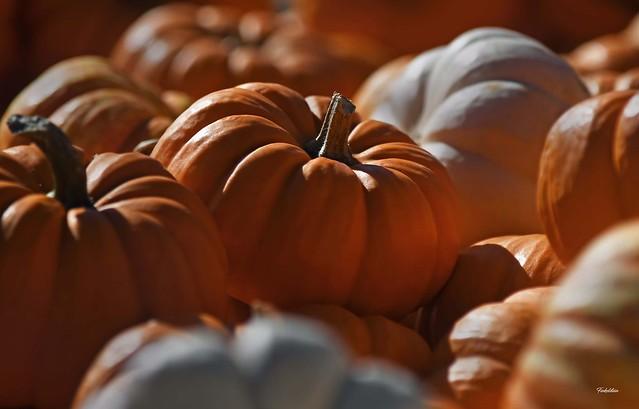 cute lil' pumpkins!