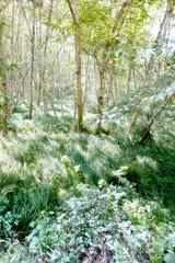 Willow-Creek-Sunbath
