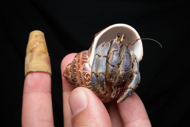 MTS4N 412 It will get better - Trading plastic 4 shells