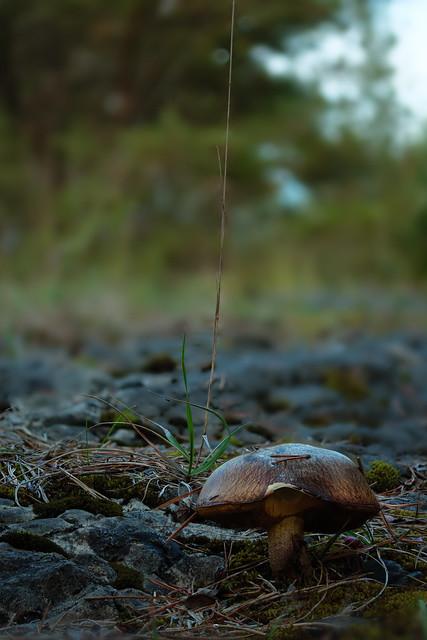 Pilz ohne Namen