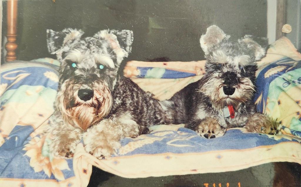 Dougall and MO, Christmas 2001 Glenbrook NSW