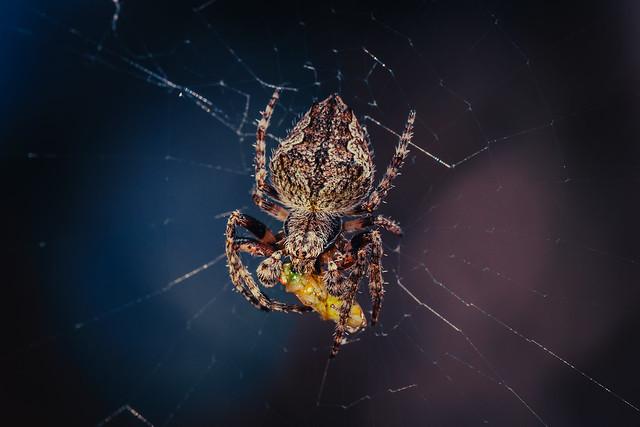 Arachnid enjoying a smoothie. (Explore)