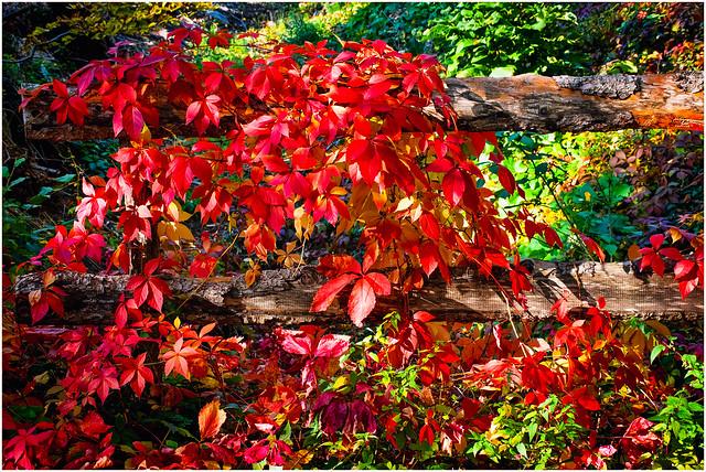 autumnal colors (2)