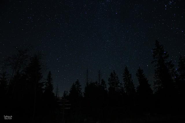 The Night @ Oderteich
