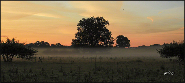 Mist Layer...