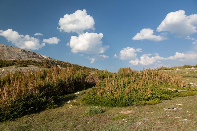 Wyoming Highlands