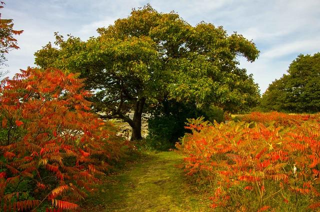 Happy Tree-mendous Tuesday!