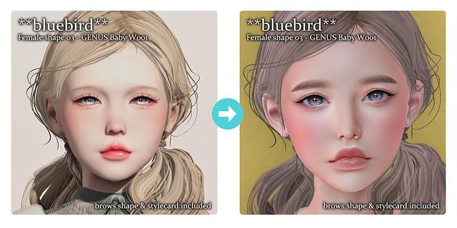 **bluebird** Shape Updated!!