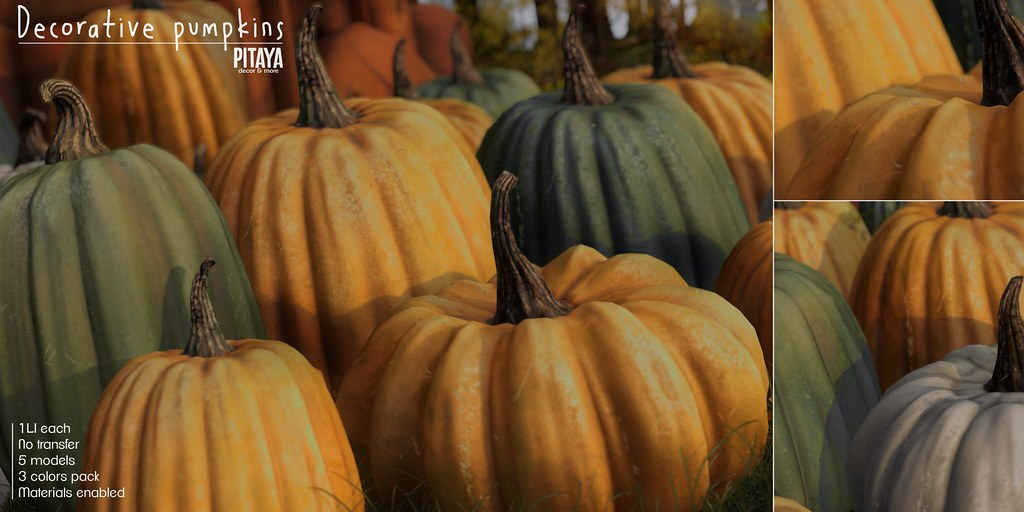 Pitaya – Decorative pumpkins @TLC