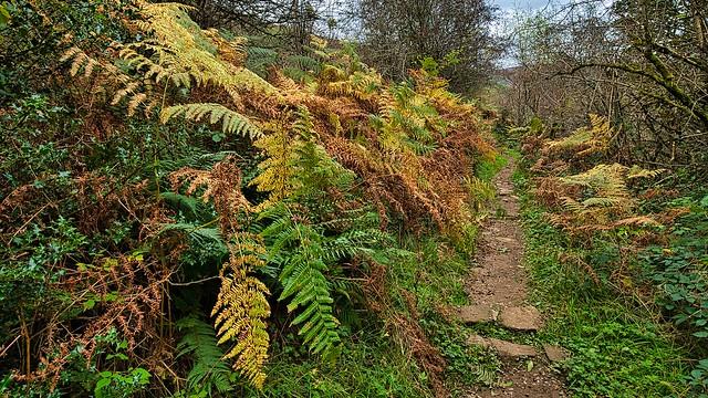 path through autumn ferns