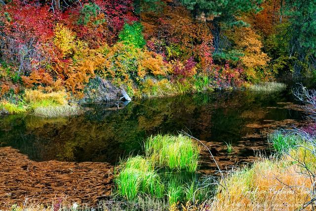 Autumnal Calmness