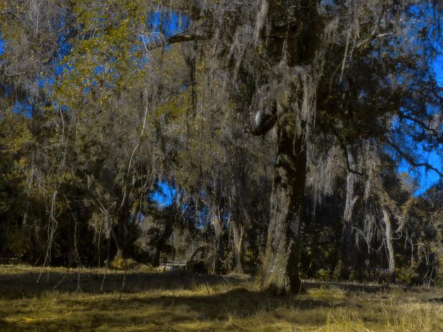 Overloaded tree canopy