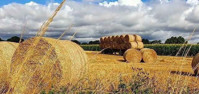 Harvest Time . (Mobile phone shot)  EXPLORED 20/10/21