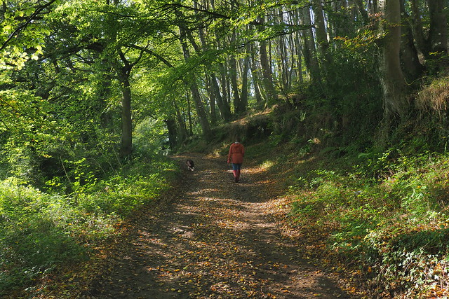 Inland walking country, Cornwall.