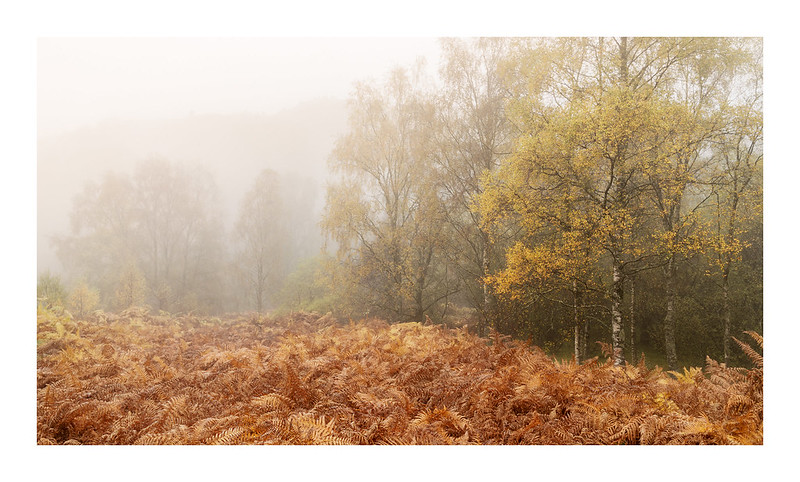 Fifty Shades of Autumn