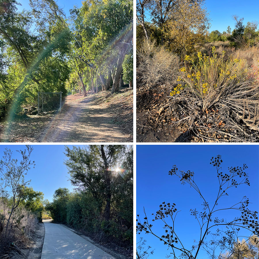 fall-in-the-nature-trail-2021