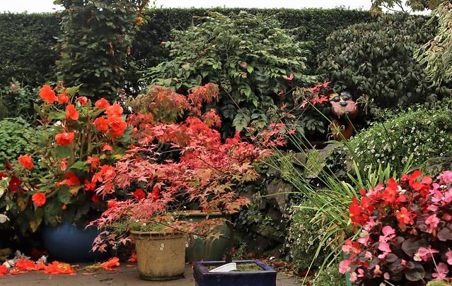 A splash of colour in Autumn ... a patio corner