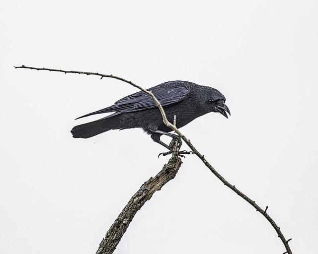 Graphic Bird Portrait Richmond Park _J6A1383 © stephen cotterell photography
