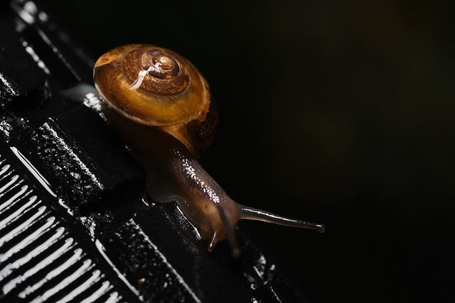At Snails Pace