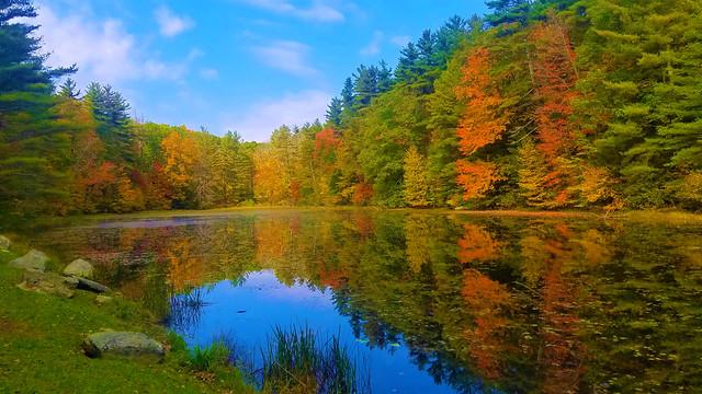Fall Leaves, New England Seasons