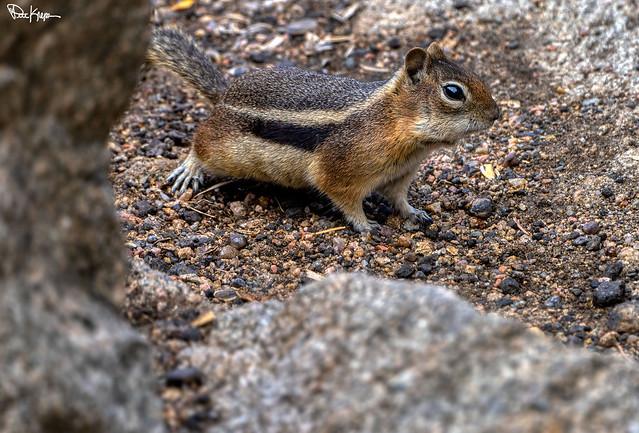 Hiding in the Rocks