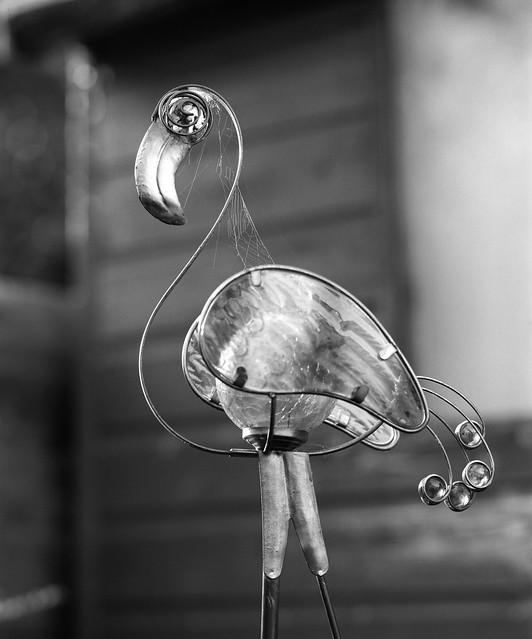 Day 277 (4th Oct) - Webby Flamingo