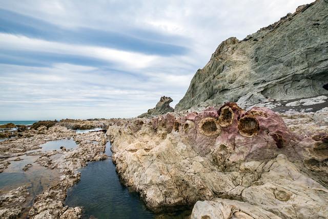 Fossils in the Ward's beach mudstone