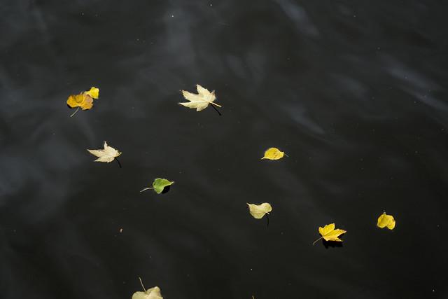 Leaves in the Tees