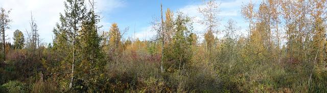 Foreshore Park swamp